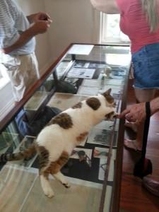 Kattene fulgte etter guiden og fikk godbiter for hvert stopp.